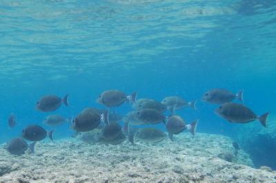 Reefmure